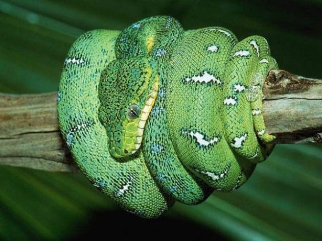 Serpenti, una fobia primordiale