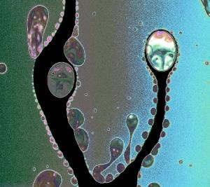 Del sapone visto al microscopio.