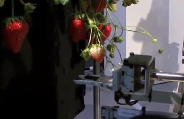 robot-fragole-619x400_197671