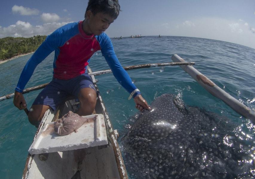 un tuffo con gli squali balena focusit