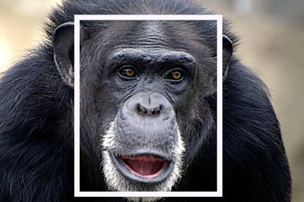 Il software che riconosce la faccia delle scimmie