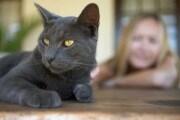 gatti-donne-suicidio_228909
