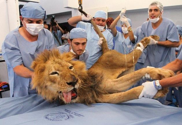 Animali dal dottore