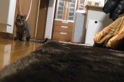 Il gatto di Buffon