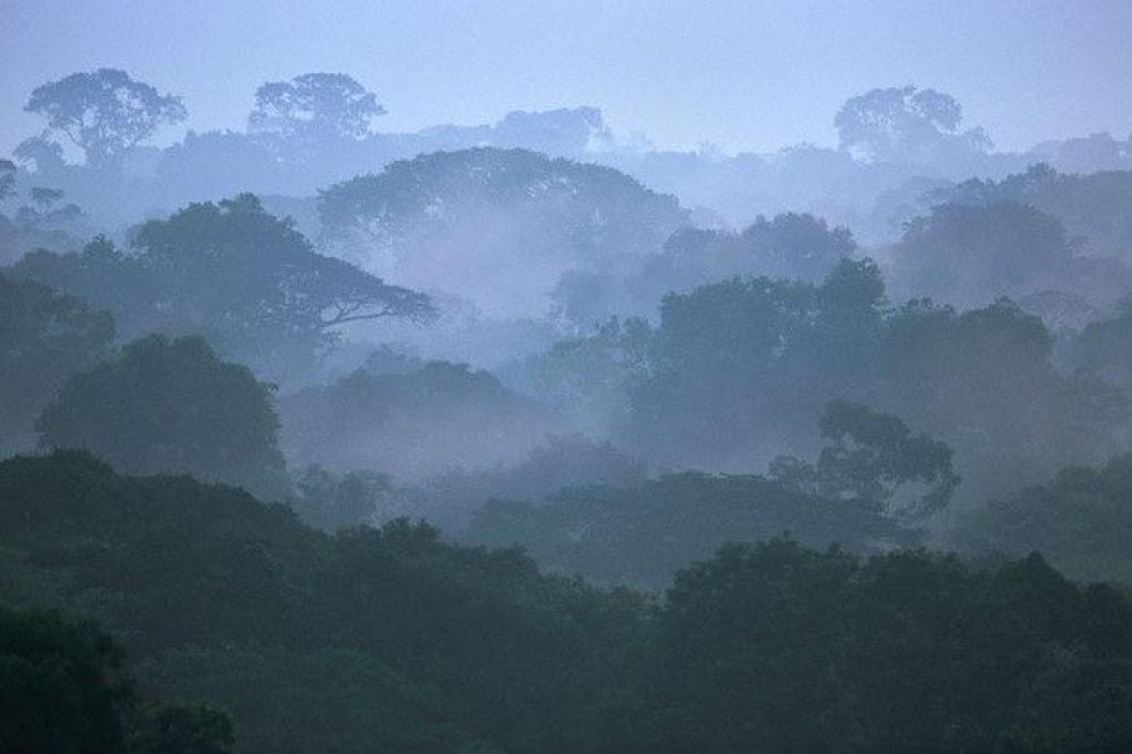 Gli alberi in Amazzonia si producono da soli la pioggia