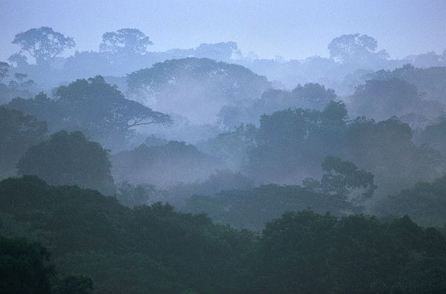 15_amazzonia