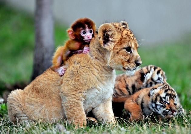 Le più strane amicizie tra animali