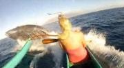 balenahawaii