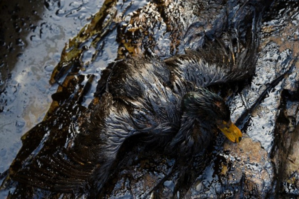 Chevron responsabile della marea nera in Brasile