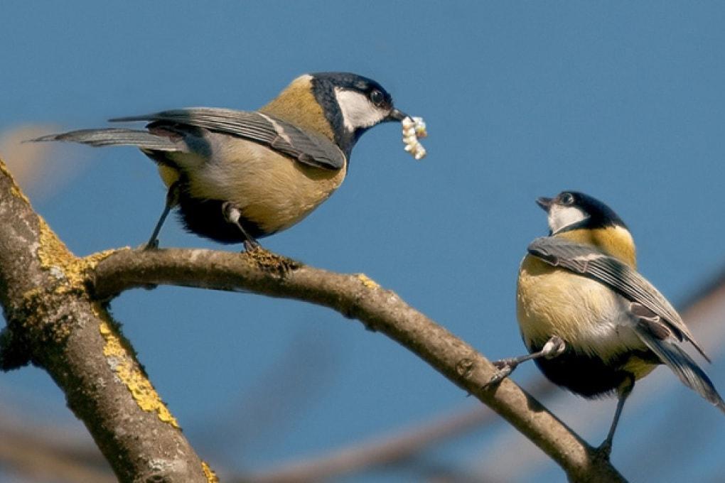 Troppo traffico: gli uccelli alzano la voce