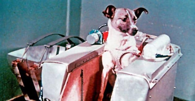 Sette pionieri astronauti animali