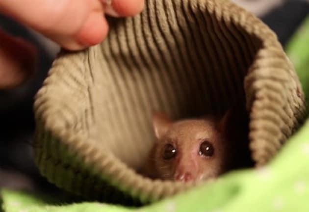 Un amore di pipistrello