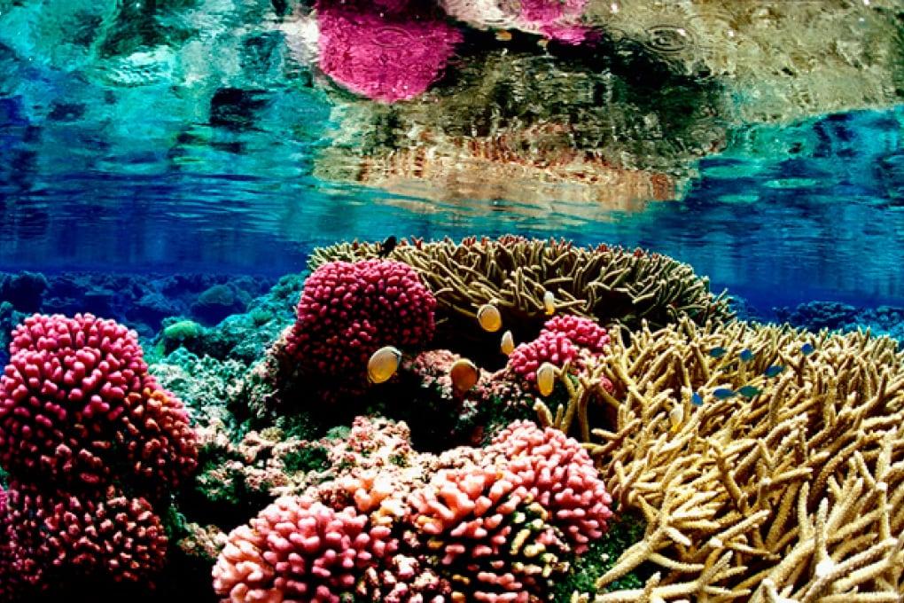 I coralli a rischio estinzione a causa dell'herpes?