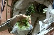 spinach3_610x401