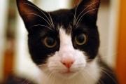 I gatti imitano le abitudini dei padroni