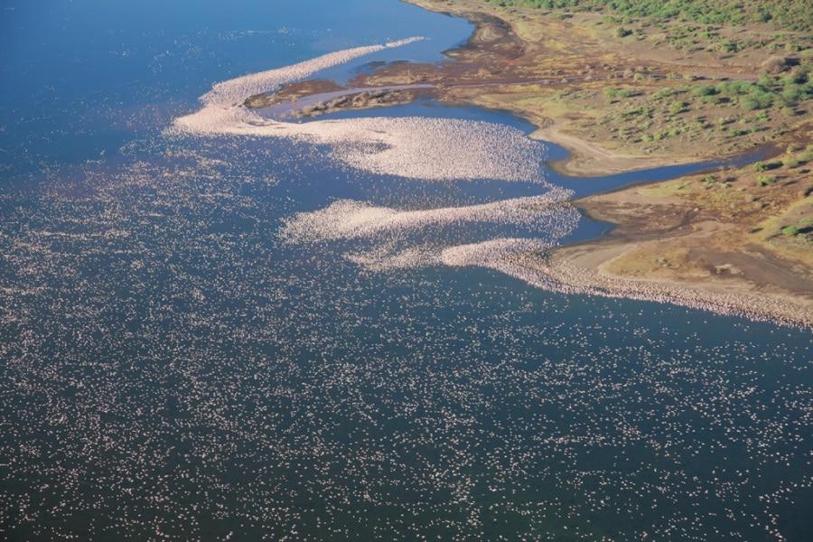Kenya, lo spettacolo dei fenicotteri rosa nel Lago Bogoria