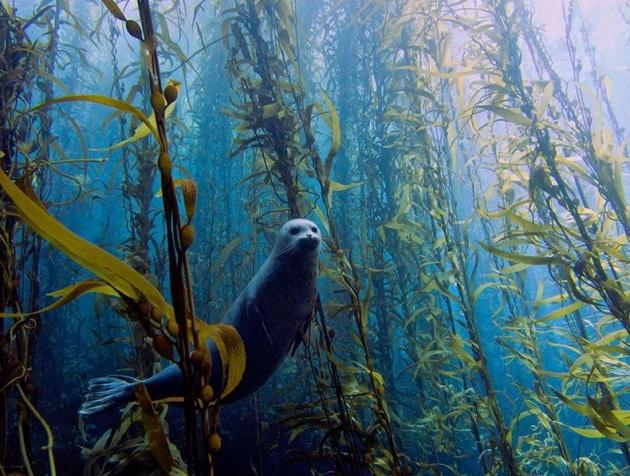 13 incontri inaspettati in fondo al mare