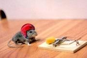 mouse_helmet_174533