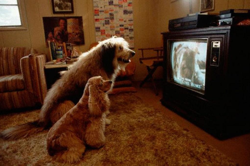 Una TV solo per cani. L'accendiamo?