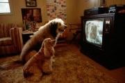 dog-tv_218996