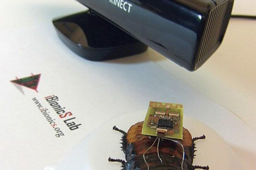 Scarafaggi bio-robot