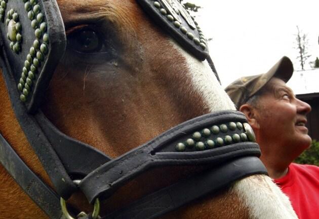Vermont: dove Internet arriva a cavallo
