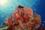 barriera-corallina-619x400_194658