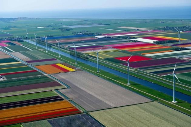 Tappeti colorati sull'Olanda: la magia dei tulipani dall'alto