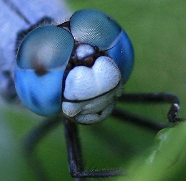 Fotografia - Macro, micro e close-up: qual è la differenza?