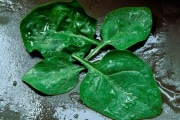 spinaci-fotovoltaico_223369