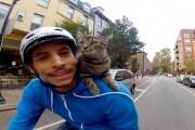 gattovideo