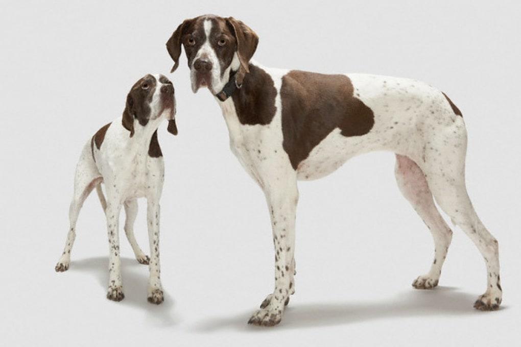 Se raccogli la pupù del tuo cane navighi gratis