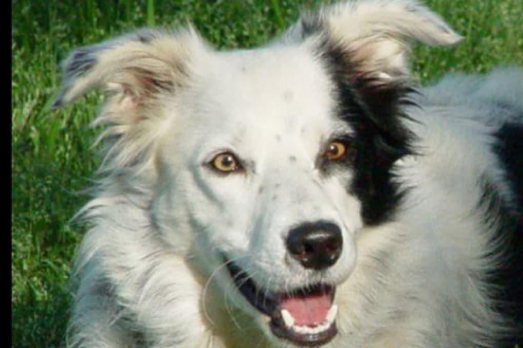 Chaser: il cane prodigio che riconosce mille parole