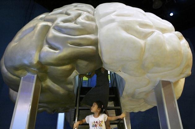 Big Brain: l'atlante 3D del cervello da un trilione di byte