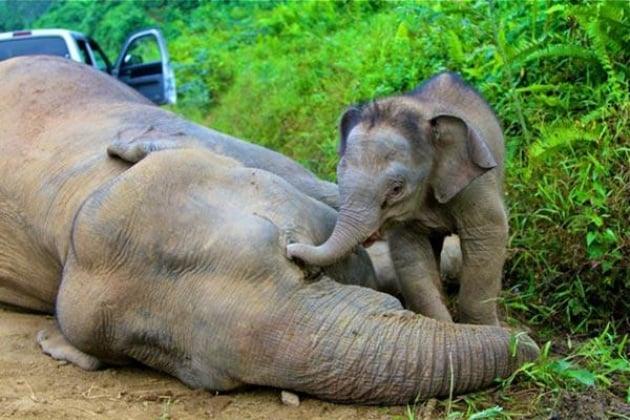 Il senso degli animali per la morte