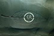 c02-foglia-fossile_184272