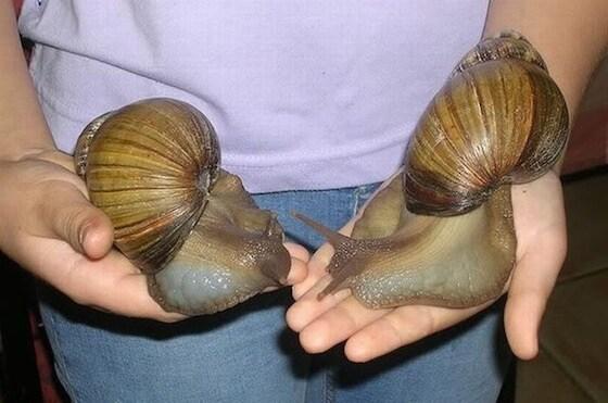 giant_snails_01