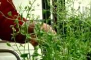 piante-anti-esplosivo_200096