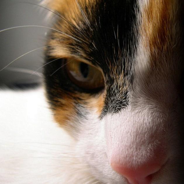 Il tuo gatto è un serial killer (si fa per dire)