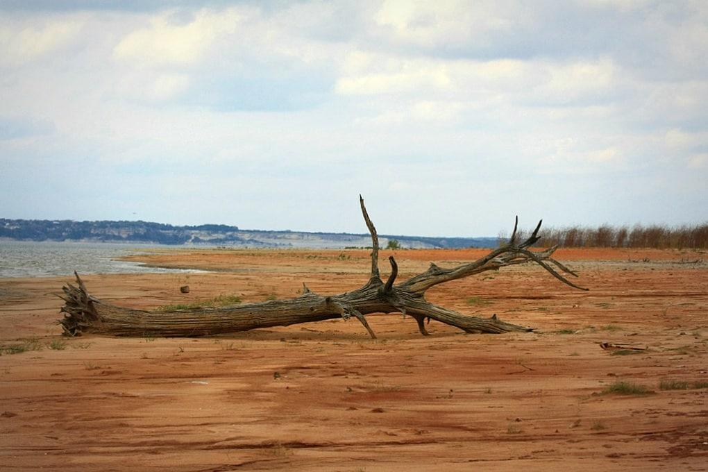 Il lamento sonoro degli alberi assetati