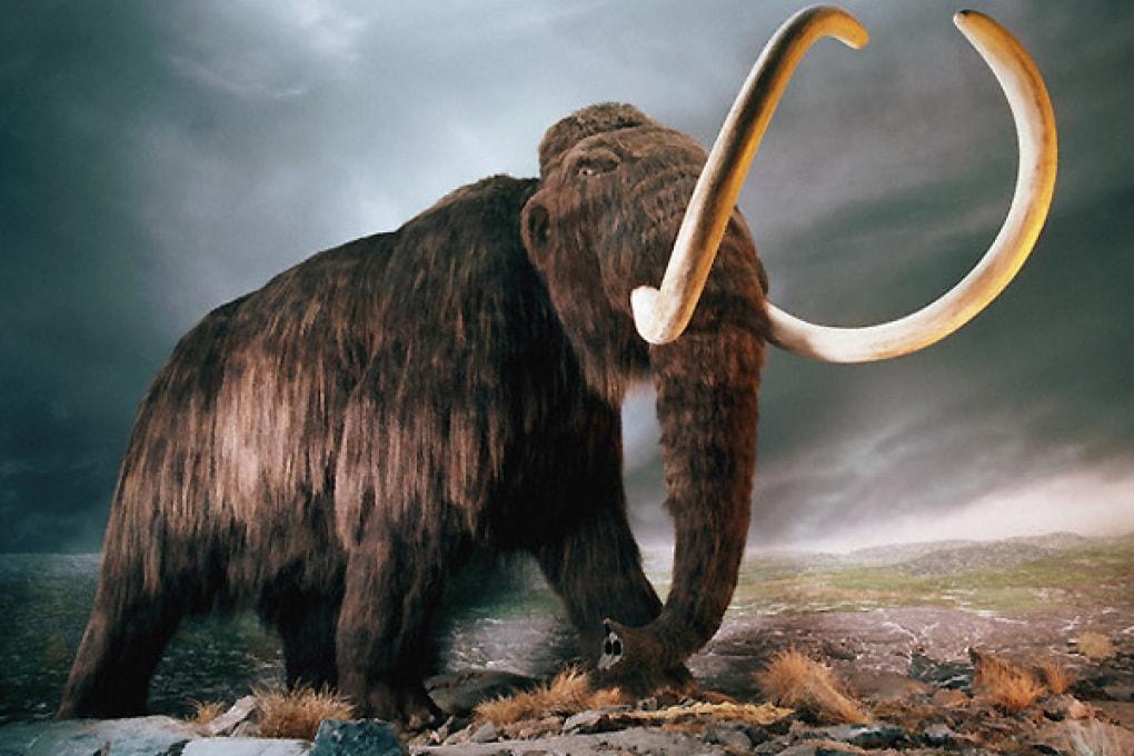 Cloneremo i mammut come in Jurassic Park