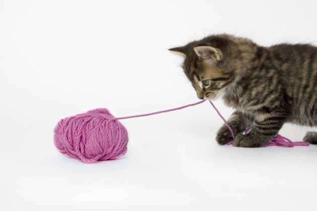 Perché i gatti ciucciano la lana?