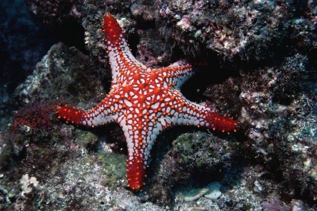 Ha un nome il misterioso killer delle stelle marine