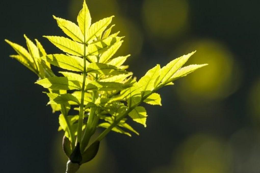 Le foreste del pianeta e l'anidride carbonica