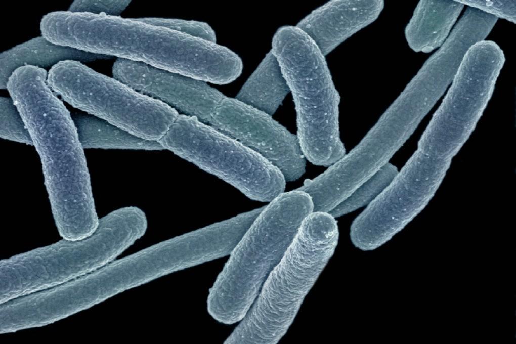 Che cos'è la biologia sintetica