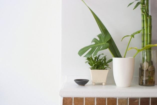 Come coltivare aria fresca nel nostro appartamento