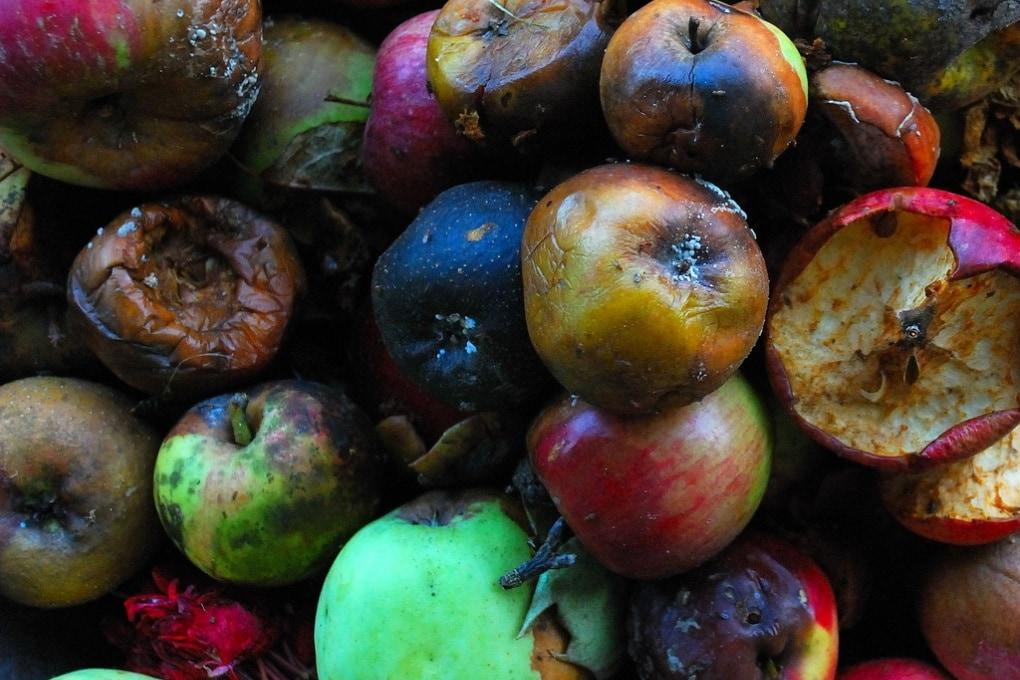 Il cibo avariato? Un'arma biologica di funghi e batteri