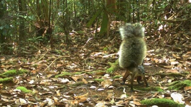 Lo scoiattolo del terrore
