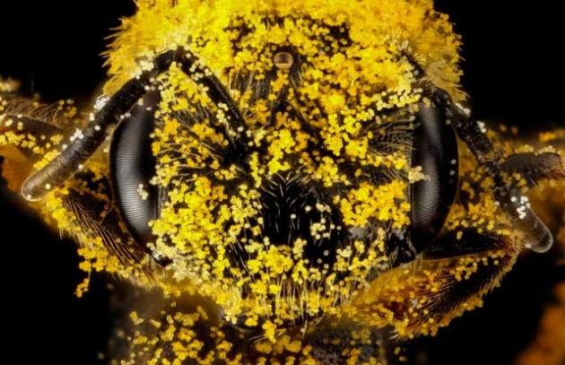Il miele: chi lo fa, come si fa, come sceglierlo