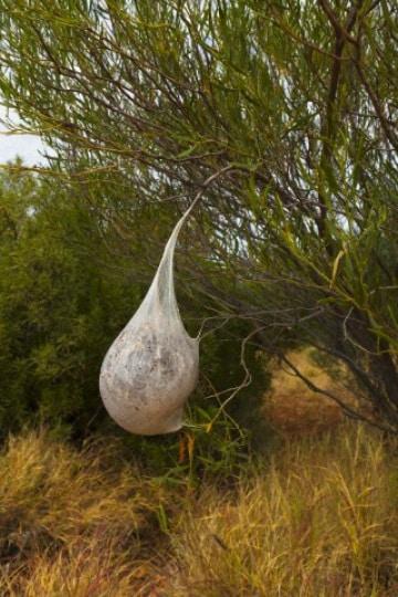 A caccia di specie invasive con Google Street View